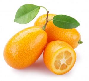 kumquat-1115px-1024px0